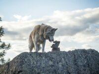 jenis-jenis anjing berbahaya - husky