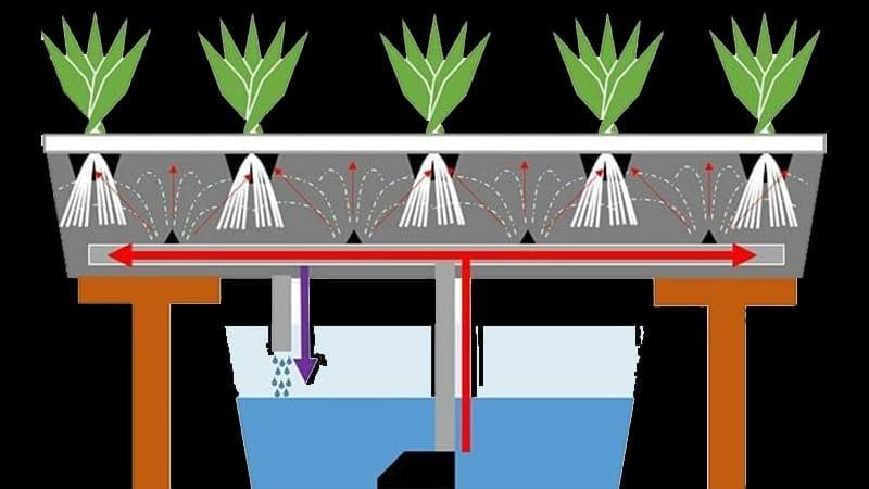 Cara Menanam Hidroponik dengan Media Air - Aeroponik