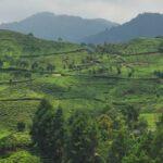 Tempat Wisata di Puncak Bogor - Puncak Bogor
