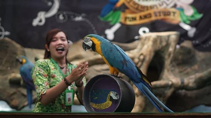 Eco Green Park Malang - Parrot Show