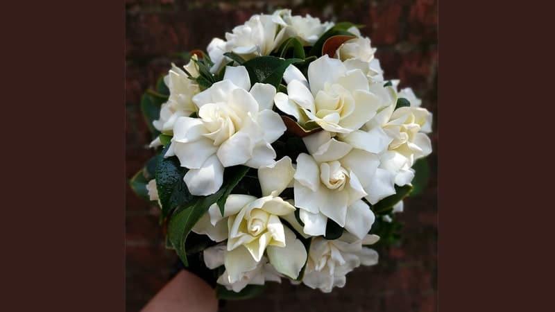 Rangkaian Bunga untuk Pacar - Gardenia Bouquet