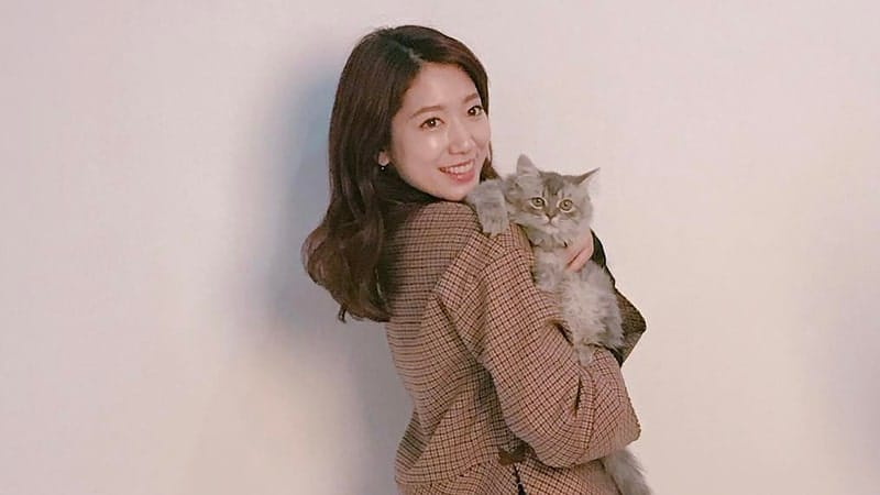 profil park shin hye lengkap - park shin hye dan seekor kucing
