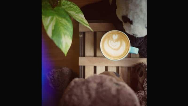 Tempat Ngopi di Jakarta - Bear & Co