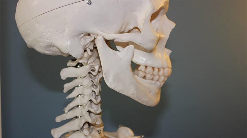 Manfaat Minum Teh Tawar - Menguatkan Tulang