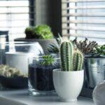 Jenis-Jenis Tanaman Hias - Kaktus dan Sukulen dalam Pot
