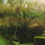 tempat wisata di ubud bali - tenggalang ubud