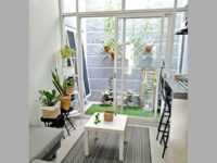 Jenis Tanaman Hias Indoor - Taman Dalam Rumah