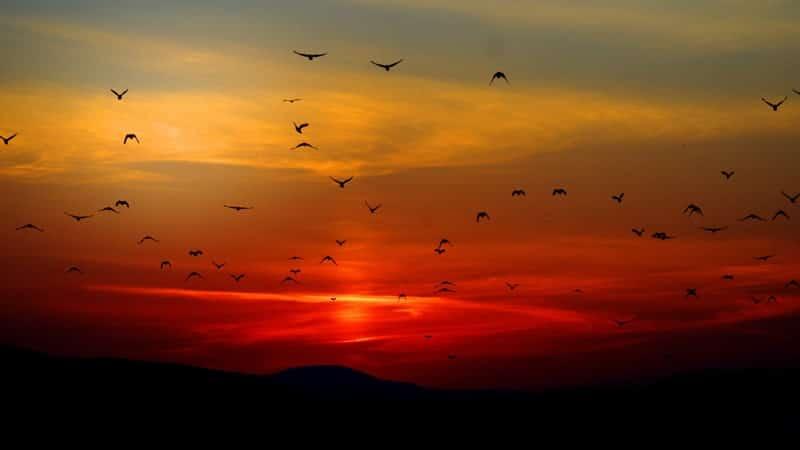 Kisah Nabi Ibrahim AS - Siluet Burung-Burung