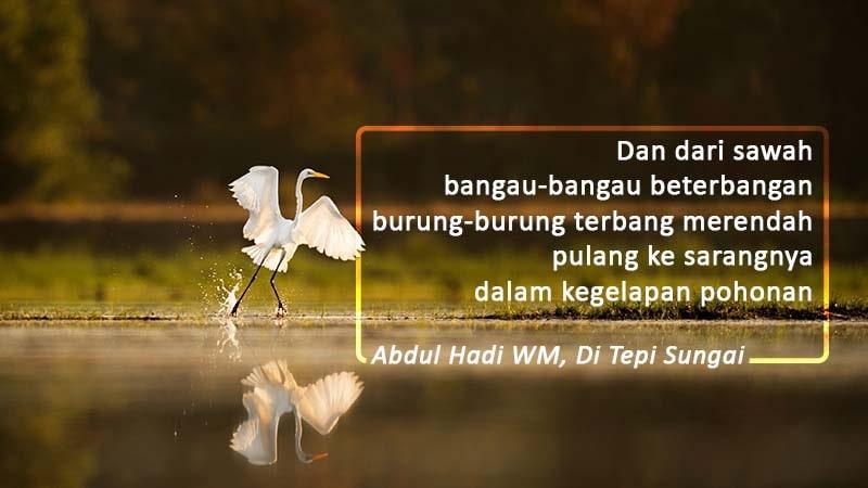 contoh puisi pendek tentang alam - burung bangau