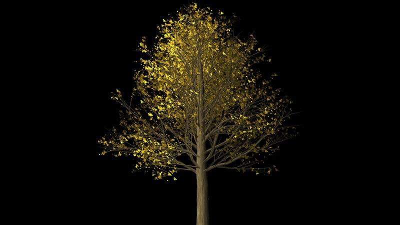 Cerita Rakyat Bawang Merah Bawang Putih - Pohon Emas