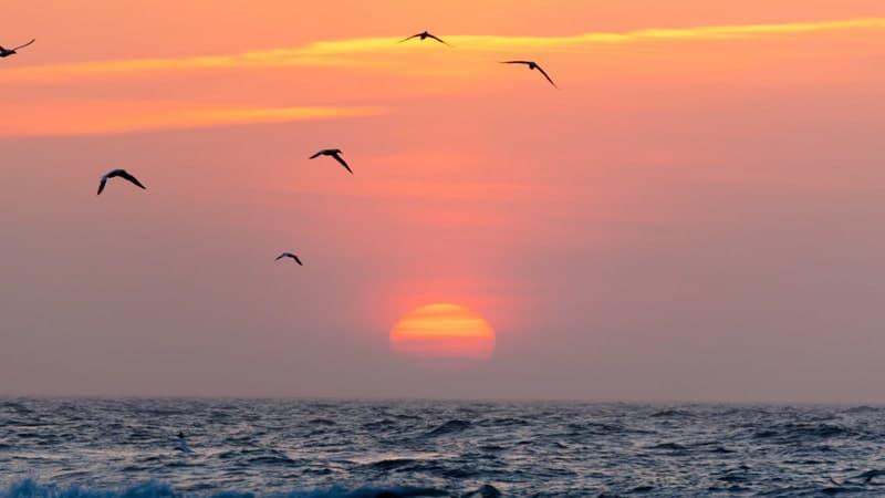 Kisah Nabi Daud AS - Burung, Laut, dan Senja