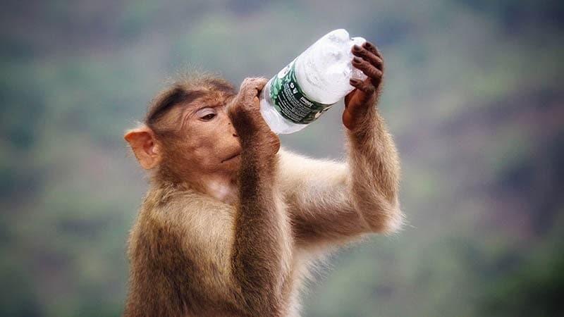 contoh teks anekdot lucu dan menyindir - monyet