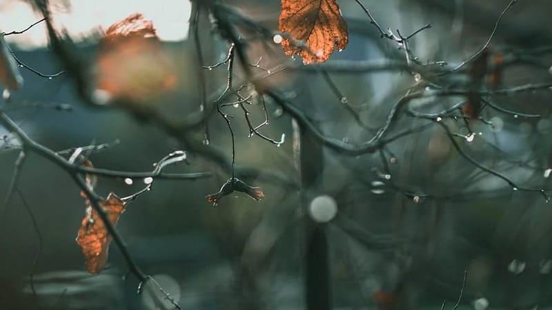 Kata-Kata tentang Hujan - ranting basah