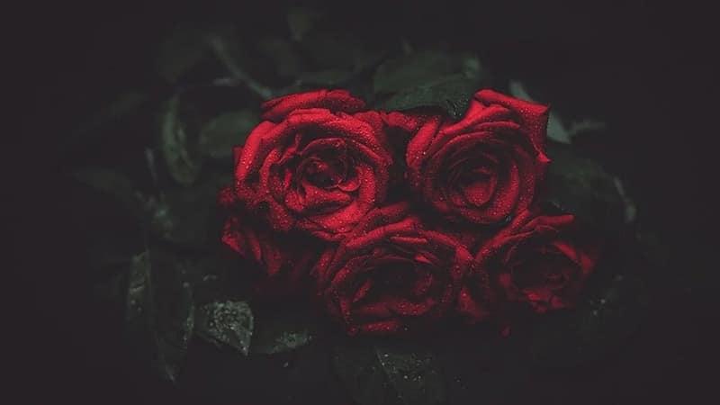 Contoh Ucapan Belasungkawa - Bunga mawar