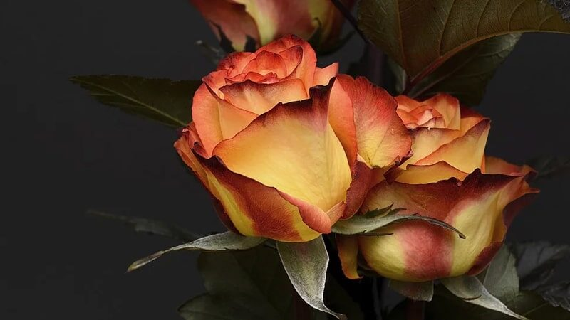 Kata-Kata Mutiara tentang Bunga