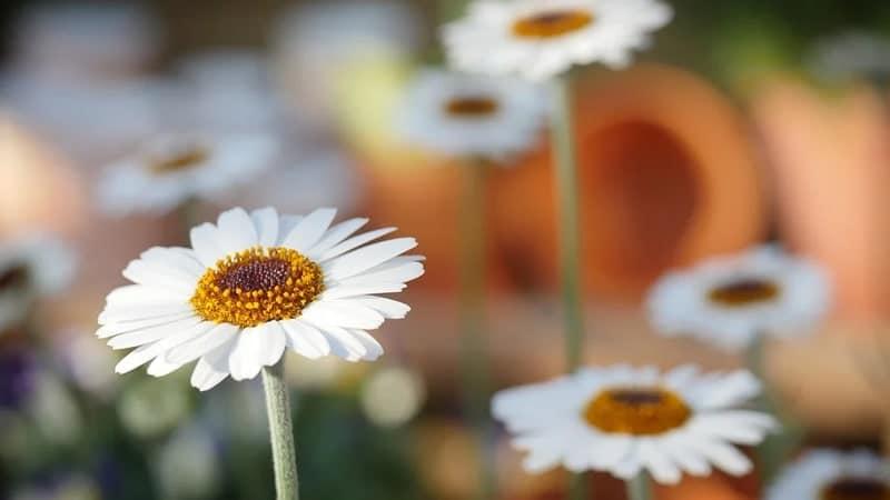 Kata Mutiara Mengenai Bunga