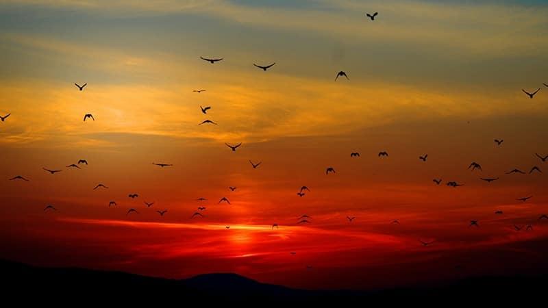 Kata-Kata Senja Sedih - Langit Senja Penuh Burung