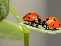 Kata-Kata tentang Alam dan Cinta - Serangga